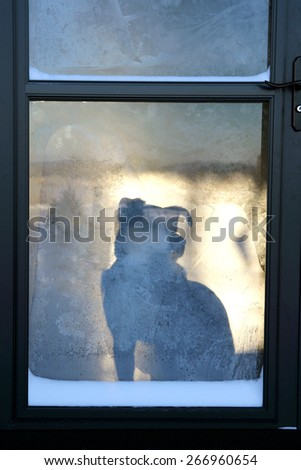 The silhouette of a loyal pet German Shepherd mix breed dog is seen waiting at the front door for his owner to return home. - stock photo
