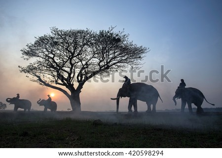 The silhouette of a person riding an elephant in a field near trees at the sunset time - stock photo