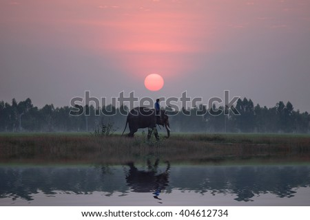 The silhouette of a person riding an elephant near the pool at the sunset time. Elephant village Thailand. - stock photo