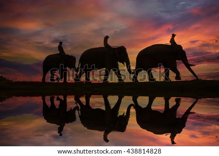 The silhouette of the Elephant and mahout in Surin provine ,Thailand .