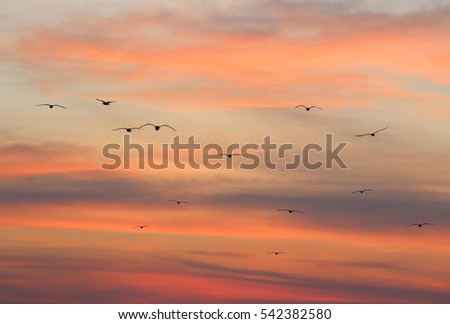 the silhouette of the flying seagulls on the sunrise.