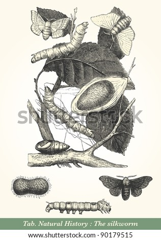 "The silkworm - vintage engraved illustration - ""Cent récits d'histoire naturelle"" by C.Delon published in 1889 France - stock photo"