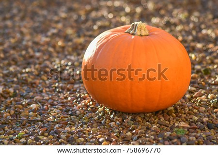 The single pumpkin put on the stones floor in front garden with sunrise in the morning, waiting for halloweens day.