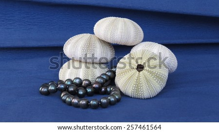 The skeletons of sea urchins and black pearls on blue background - stock photo