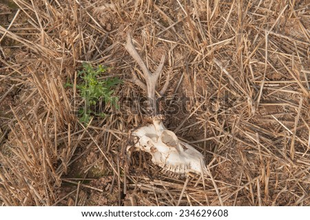 The Skull and Antlers of a Deer in a Field on Cutlers Farm near Stratford upon Avon, Warwickshire, England, UK - stock photo