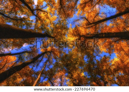 The sky cloudless and the sun through the branches of a tree in autumn - stock photo