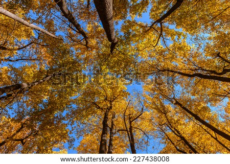 The sky cloudless and the sun through the branches of a tree in autumn from the bottom - stock photo
