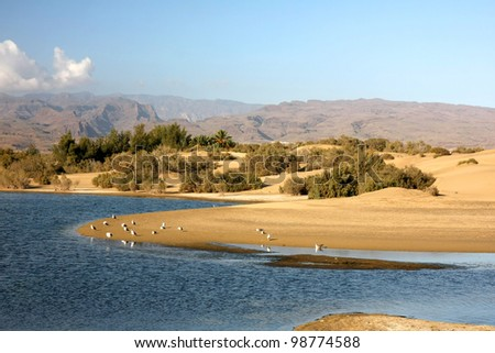 "The small, but amazing desert ""Dunas de Maspalomas"" in Gran Canaria island,Spain with some water, where the birds can rests, and the mountains on background - stock photo"