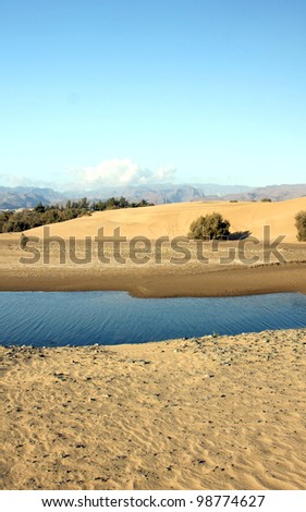 "The small, but amazing desert ""Dunas de Maspalomas"" in Gran Canaria island,Spain with some water, where the birds can rests, and the mountains on background"