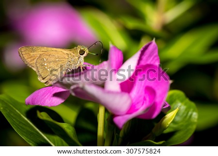 The small butterfly perched on flower in the garden.