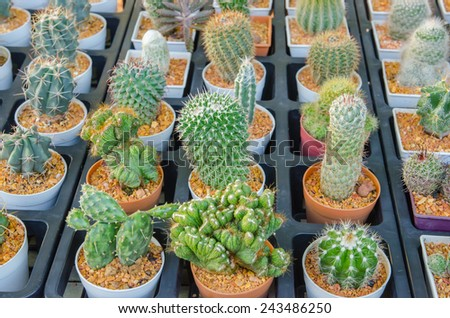 the Small different types of cactus plants. - stock photo
