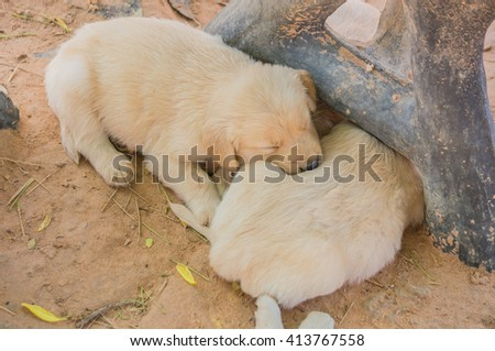 The small dog is sleeping. - stock photo