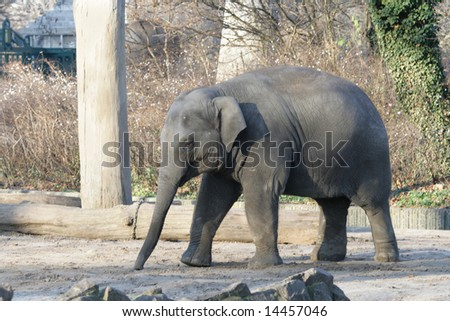 The small elephant in a zoo of Berlin