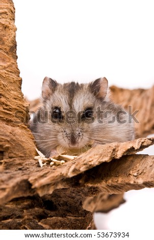 The small hamster eat sunflower seed. - stock photo