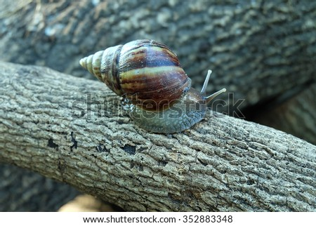 The snail on the timber