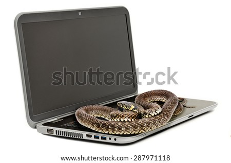 The snake lying on the laptop looking at the screen isolated on white background - stock photo