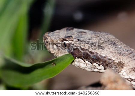 the snake's head, close-up - stock photo