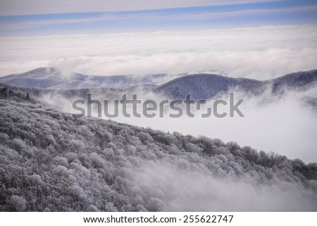 The snow-covered trees in the Appalachian Mountains in the early morning with the fog in the valley. Taken from the top of Round Bald at Roan Mountain.