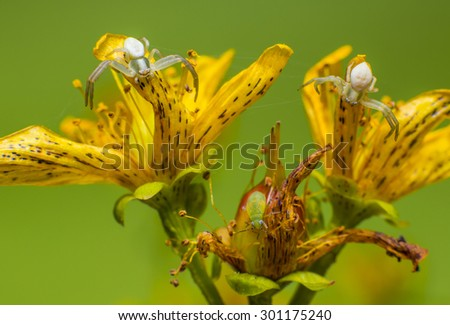 The spider attack - stock photo
