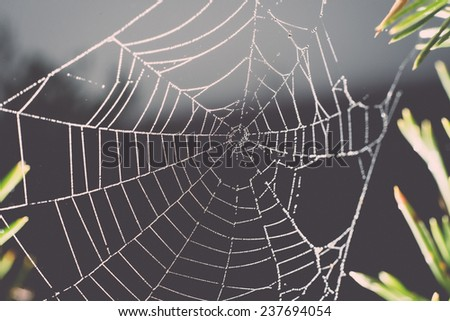 The spider web (cobweb) closeup background - retro, vintage style look
