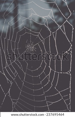 The spider web (cobweb) closeup background - retro, vintage style look - stock photo