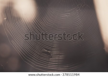 The spider web (cobweb) closeup background. The Spider Web at sunrise. Spider web with colorful background, nature series. Cobweb with dew drops on a blue background. Spider web. - stock photo