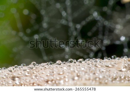 The spider web with dew drops. Abstract background - stock photo