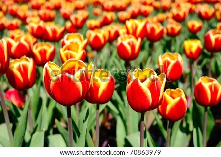 the spring flowers - stock photo