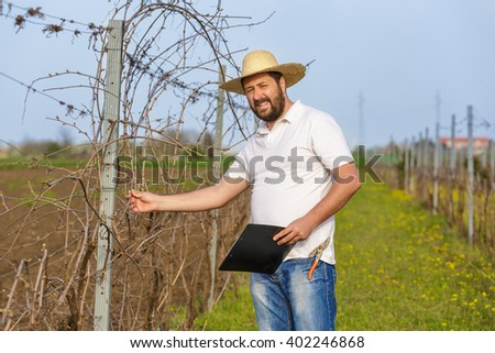 The spring pruning and controlling vine in vineyard.