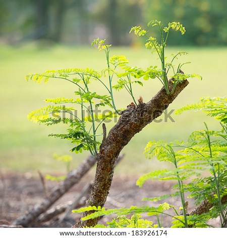 The sprout grow afresh on dry timber - stock photo