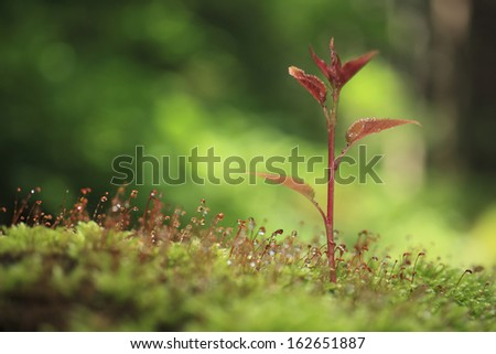 The sprout of moss and a cherry tree