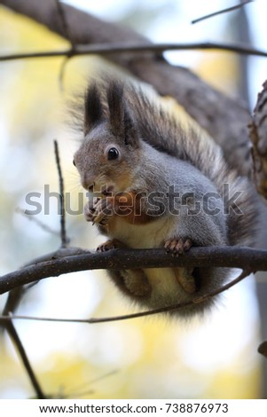 The squirrel sits on a branch