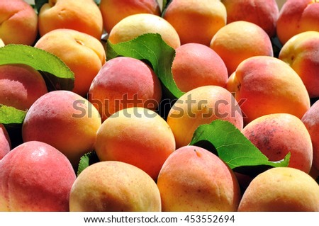 the stack of freshly harvested ripe apricots  - stock photo