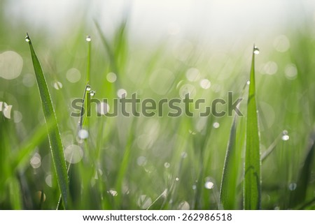 The stems of green grass covered with dew - stock photo