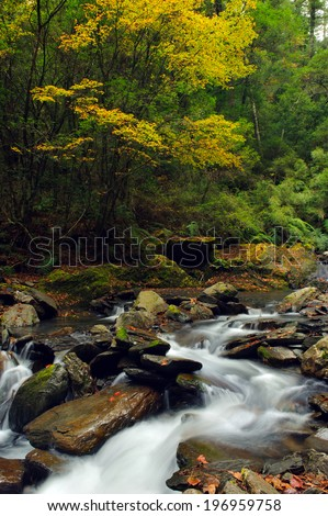 The stream flows over the rocks and through the woods. - stock photo