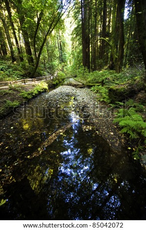 The stream through the Muir woods - stock photo