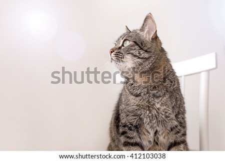 The striped cat costs a chair and attentively looks aside - stock photo