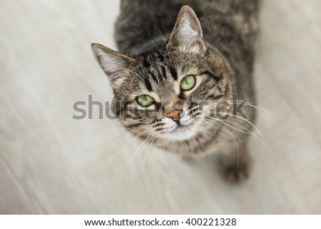 The striped cat with green eyes looks up at a camera - stock photo
