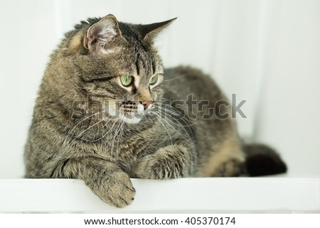 The striped green-eyed cat lies on a white chair and attentively looks down - stock photo