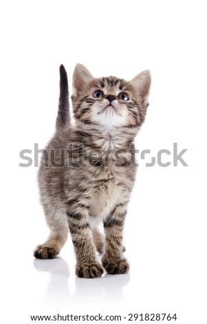 The striped kitten looks up on a white background. - stock photo