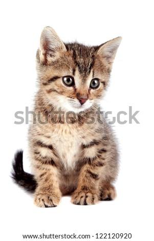 The striped kitten on a white background - stock photo