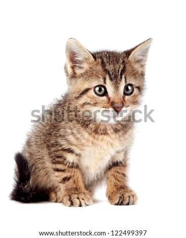 The striped kitten on a white background