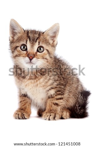 The striped kitten sits on a white background