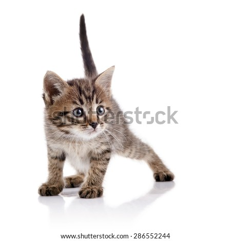 The striped lovely guarded kitten on a white background.