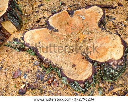 The stump left after felling tree - stock photo