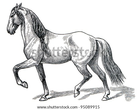 "The style walk a horse. Ambling. Publication of the book ""Meyers Konversations-Lexikon"", Volume 7, Leipzig, Germany, 1910 - stock photo"