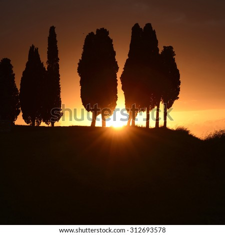 The sun against the silhouette of some cypresses in Tuscany - stock photo
