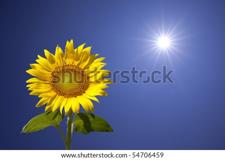 The sun and beautiful sunflower