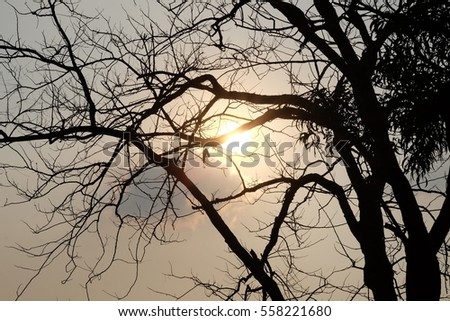The sun and silhouette trees