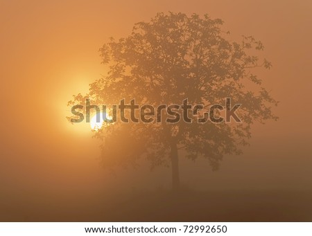 the sun goes up behind an isolated tree - stock photo
